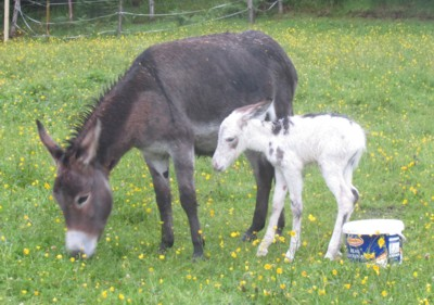 Mousse and foal Minka