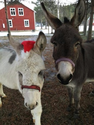 Moose and Minka at Christmas
