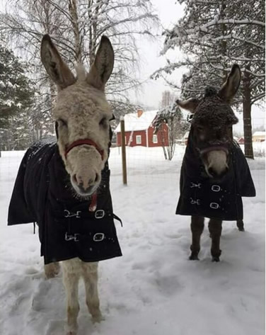 Moose and Minka in the snow